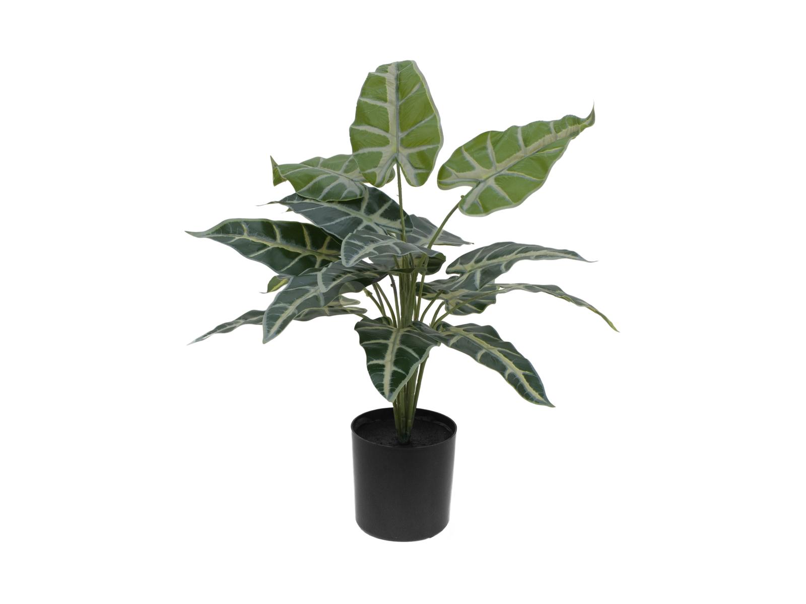 EUROPALMS Caladium, piante artificiali, 38cm