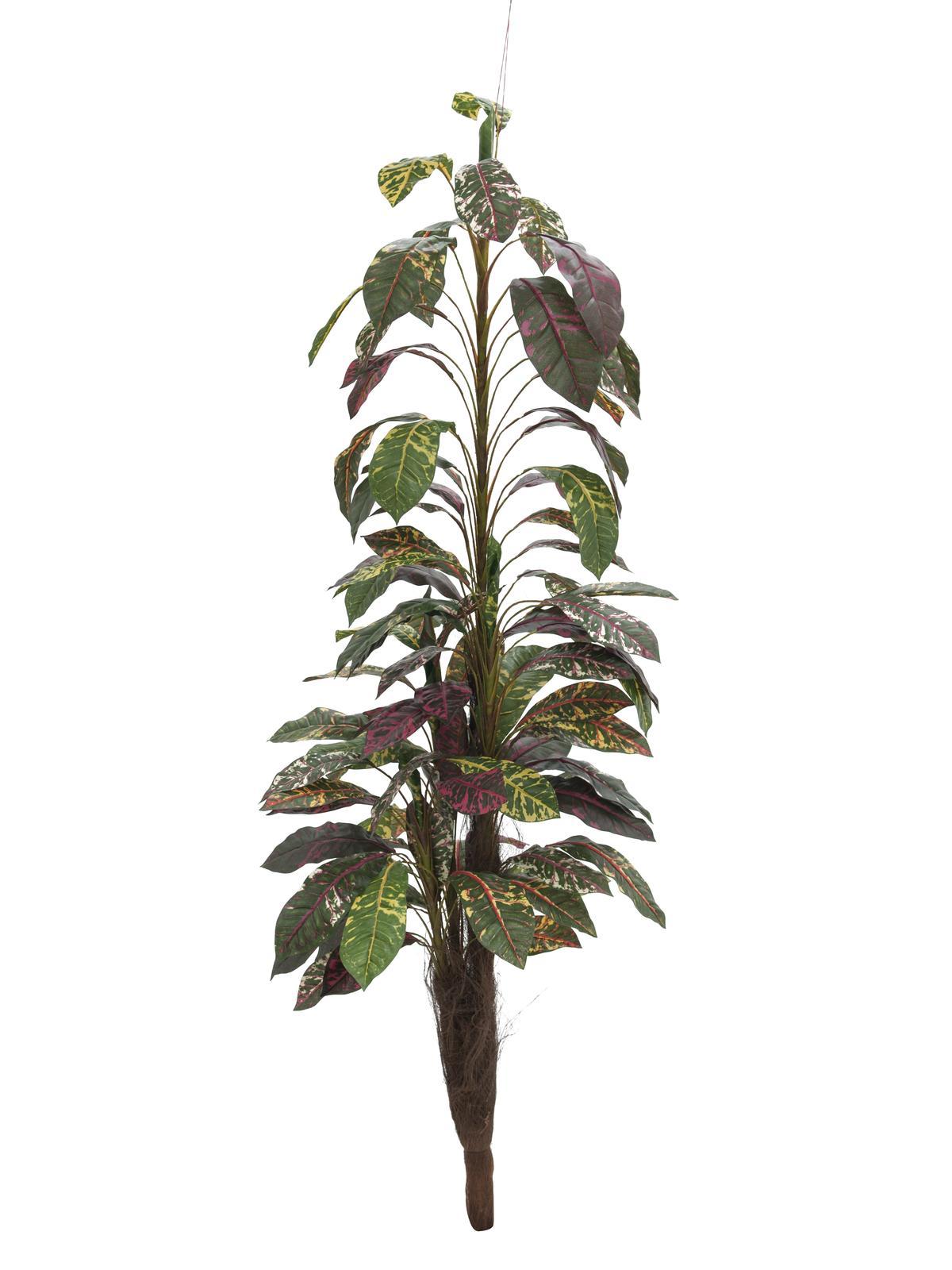 EUROPALMS Croton mit Kokosstamm, künstlich, 180cm