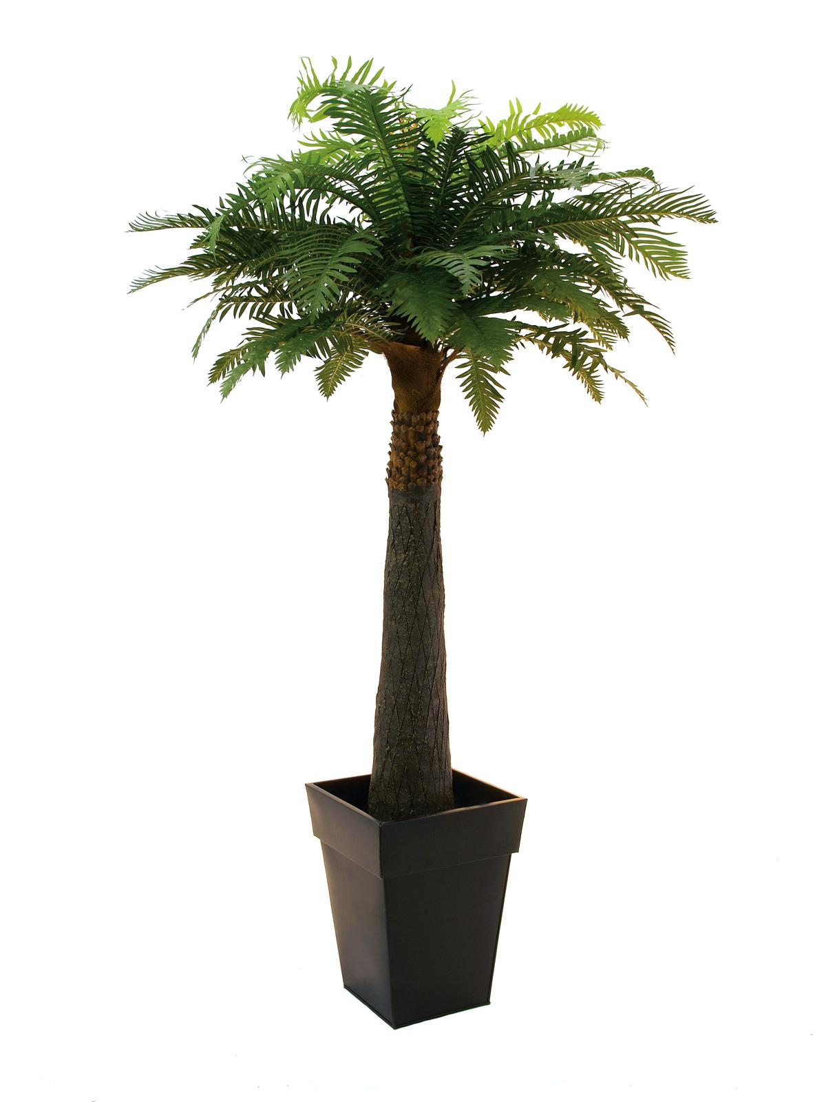 EUROPALMS Farnpalme, künstlich, 180cm