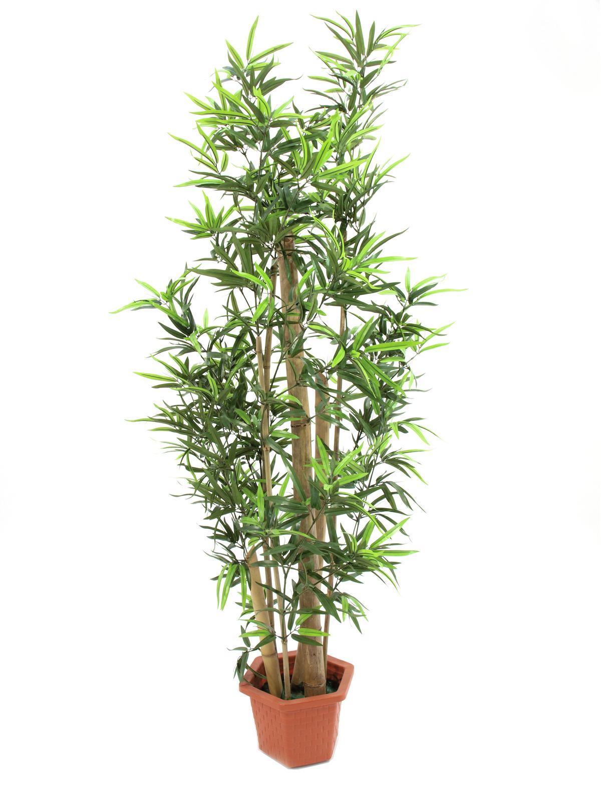 EUROPALMS Bambus mit dicken Naturstämmen, Kunstpflanze, 205cm