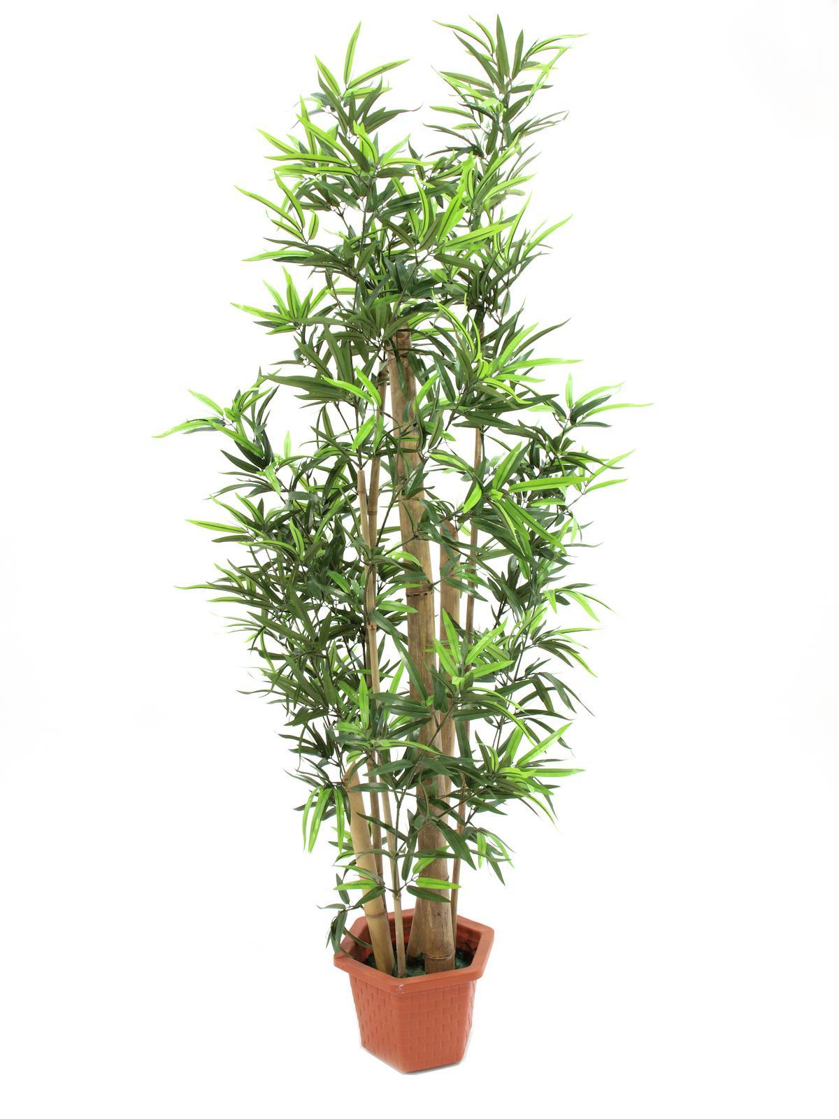 EUROPALMS Bambus mit dicken Naturstämmen, Kunstpflanze, 225cm