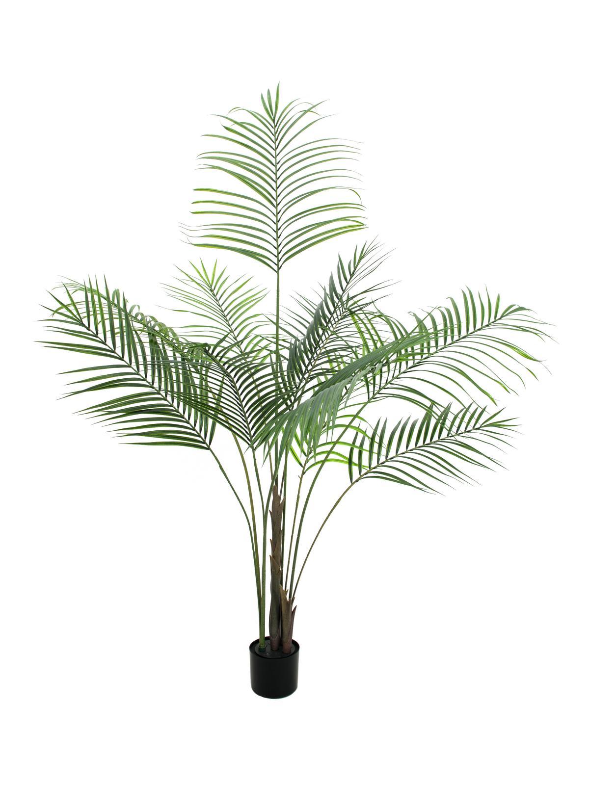 EUROPALMS Großblatt-Areca, Kunstpflanze, 185cm