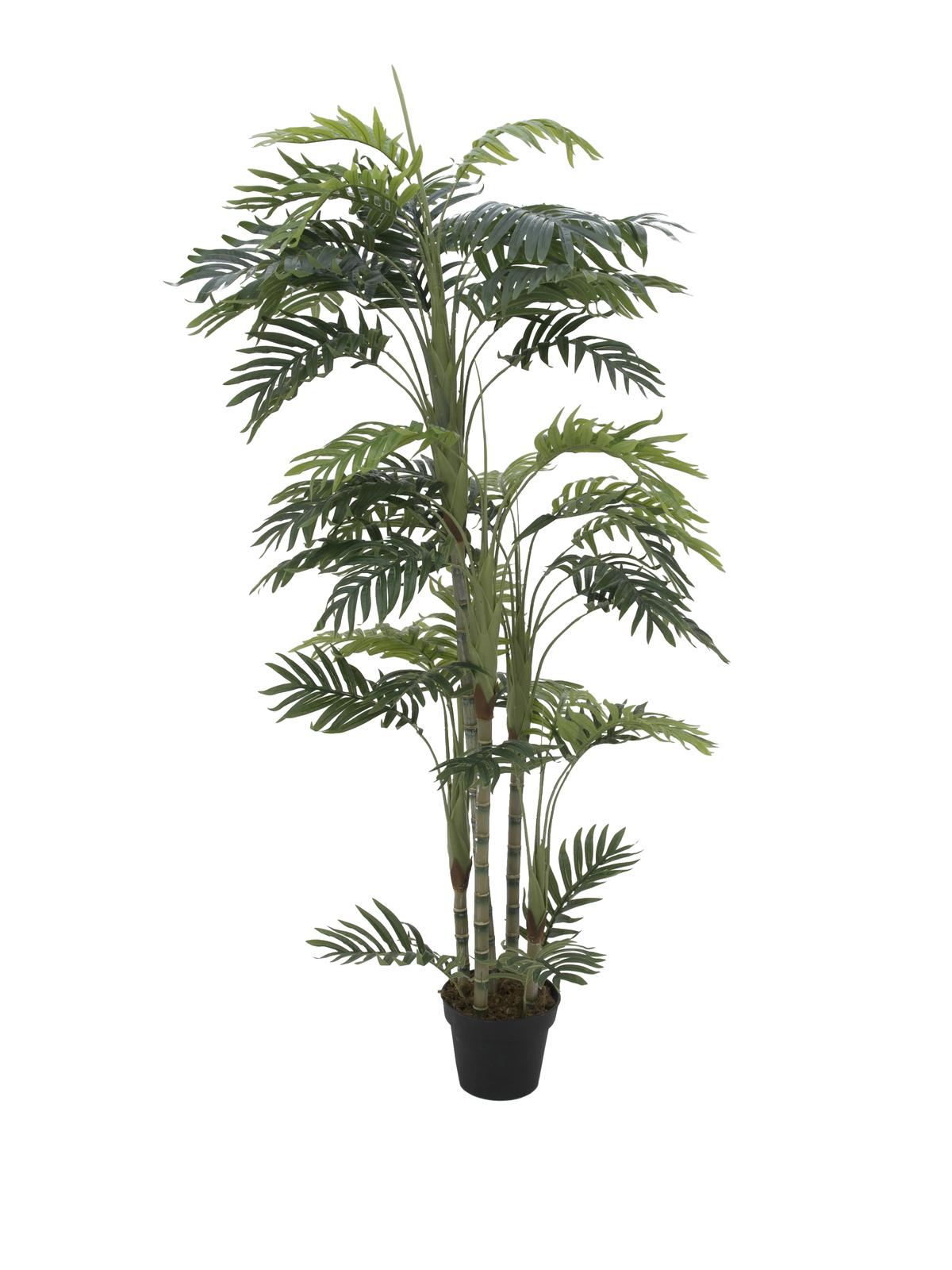 EUROPALMS pianta artificiale Phoenix palma , 170cm