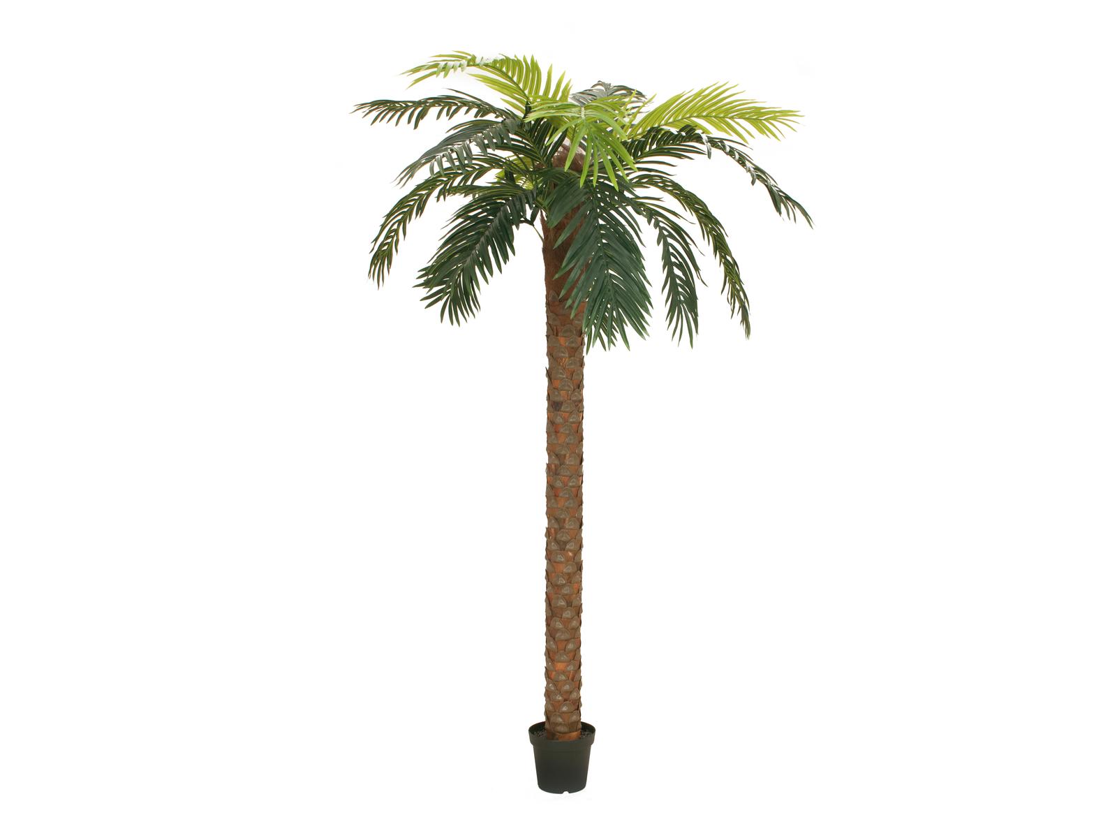 EUROPALMS Phoenix palm deluxe, piante artificiali, 250cm