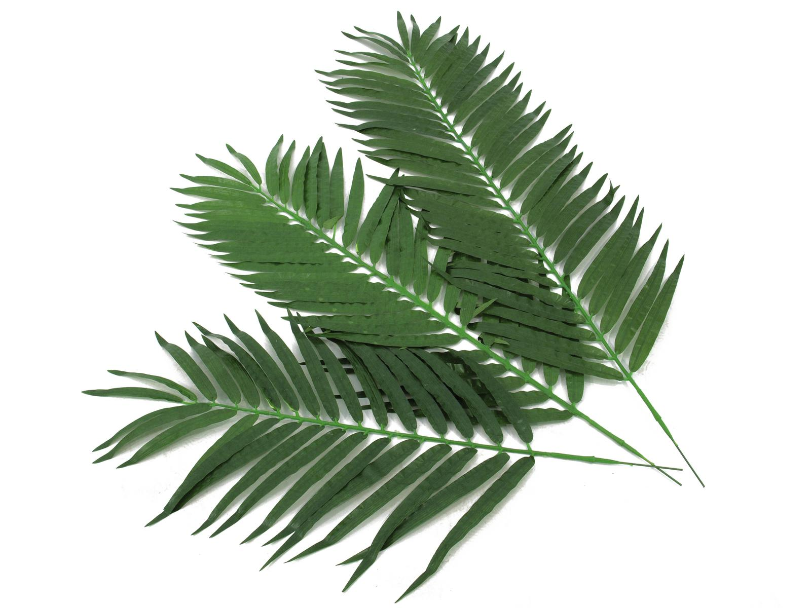 EUROPALMS di palma di Cocco, filiale di 80 cm 12x