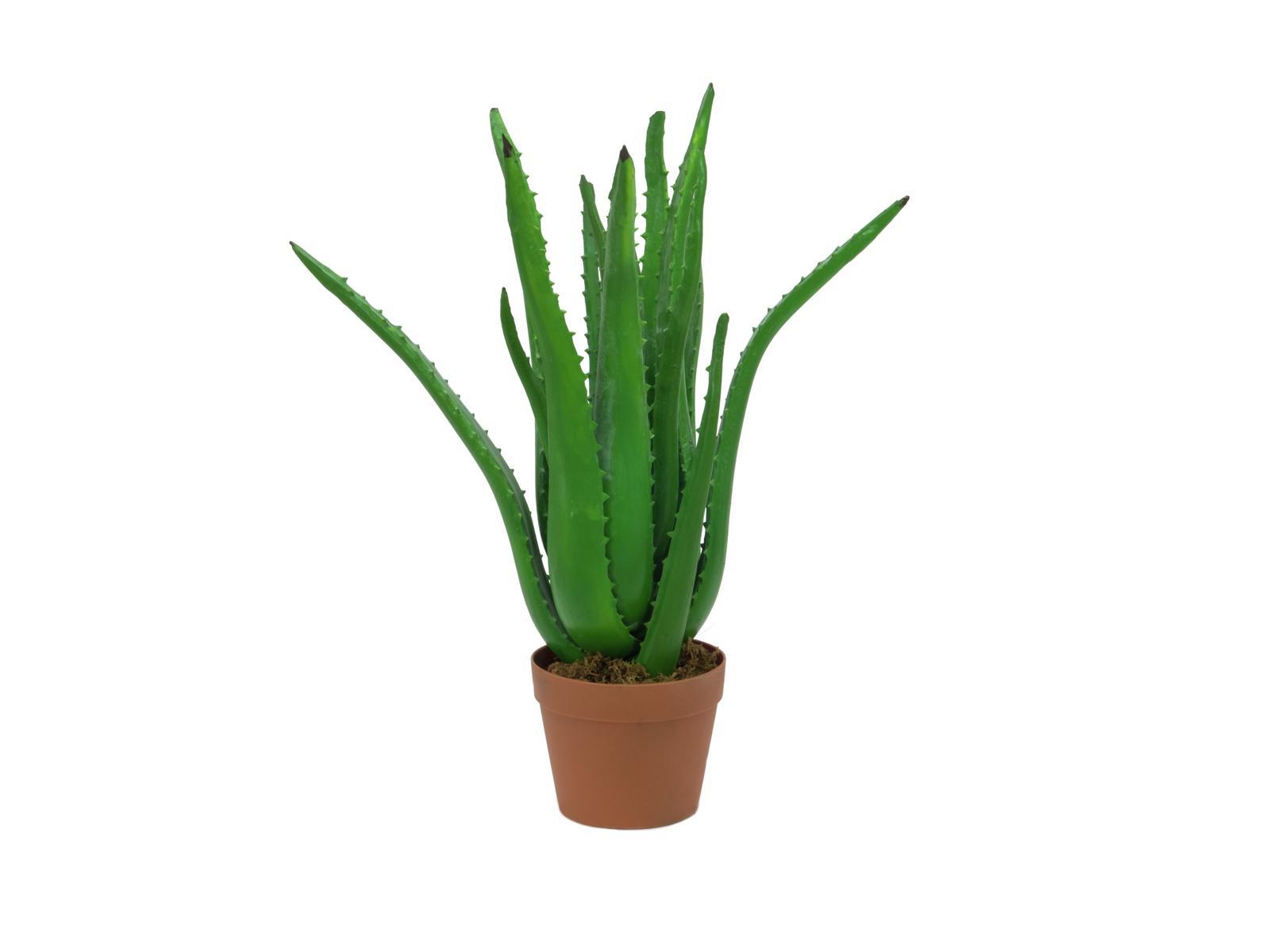 EUROPALMS Aloe-Vera-Pflanze, Kunstpflanze, 63cm