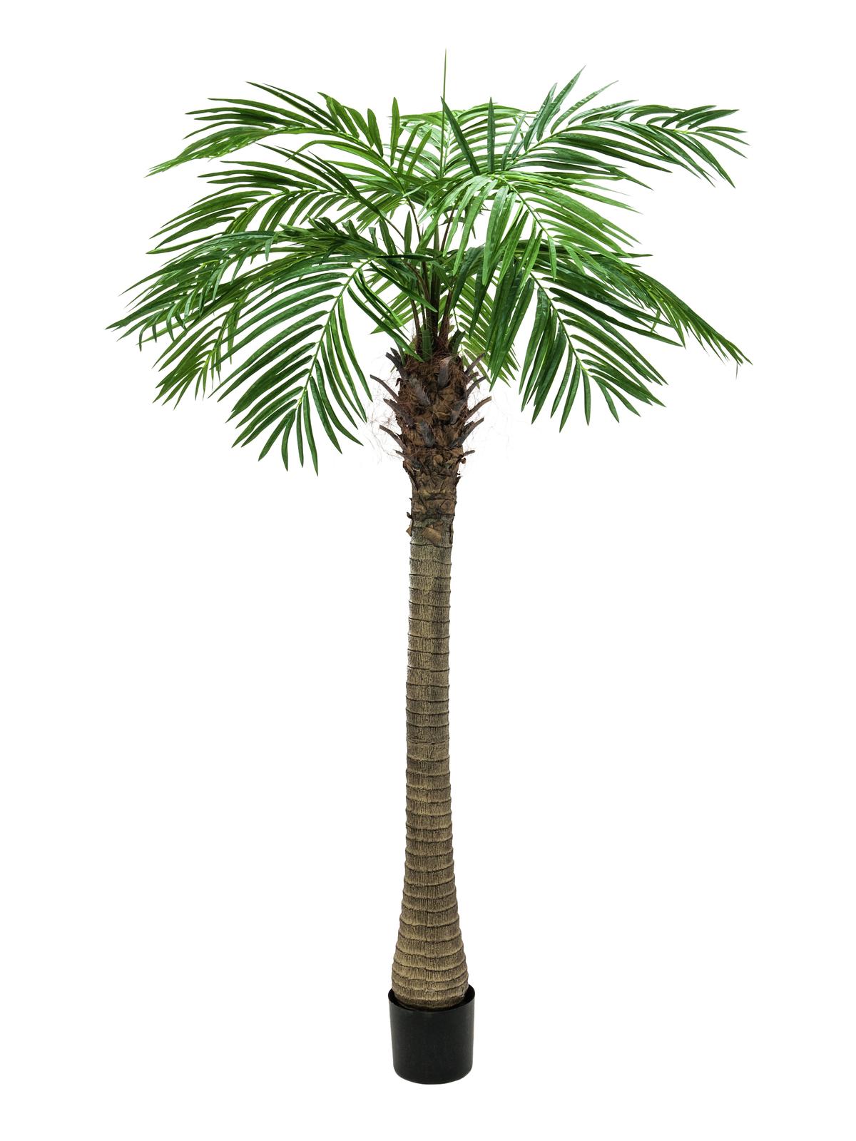 EUROPALMS pianta artificiale Phoenix palma di lusso, 210cm