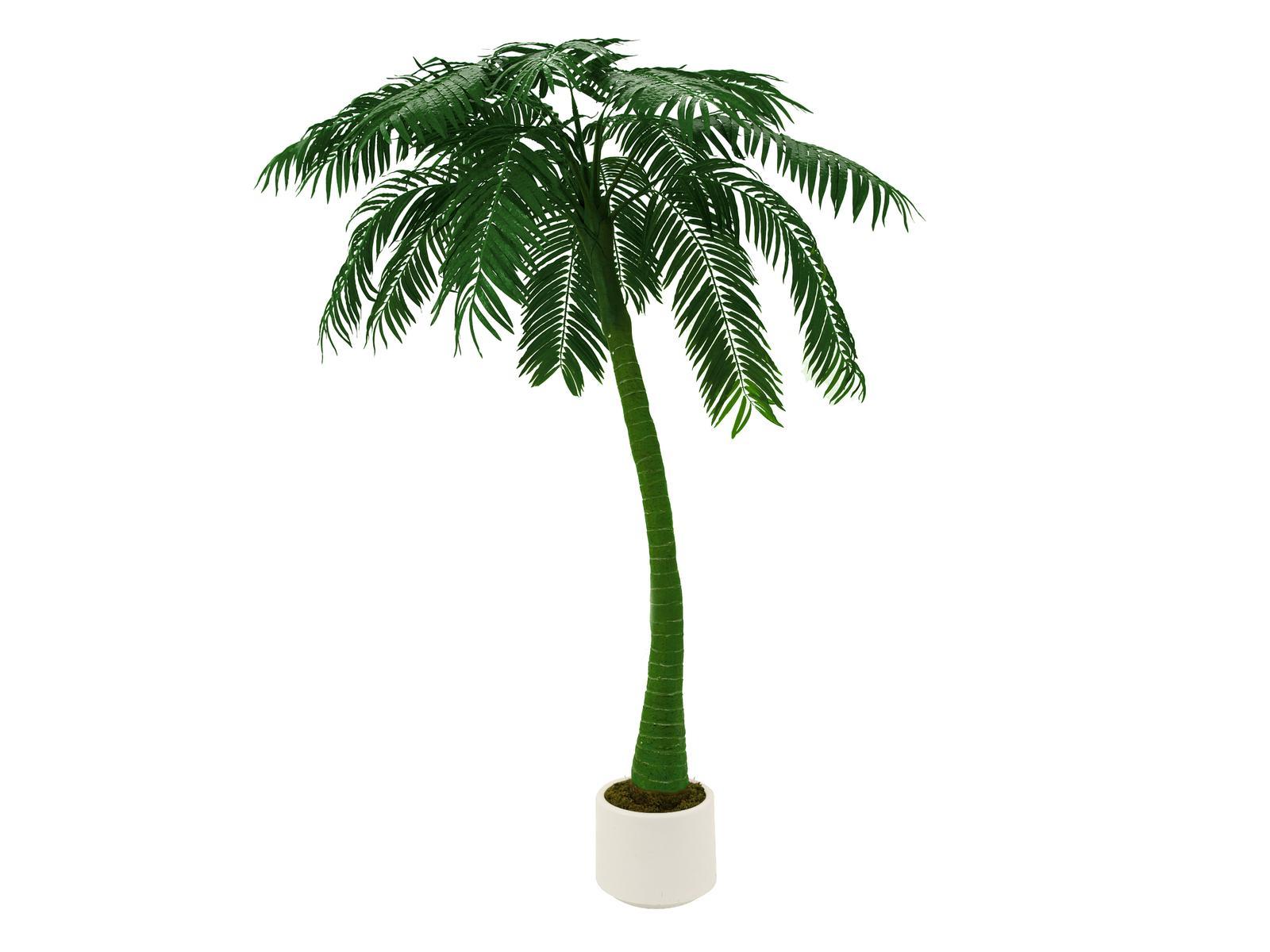 EUROPALMS di Palma, 1 tronco, 300cm, verde