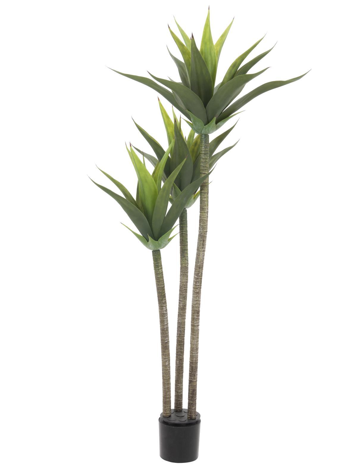 EUROPALMS Yucca, 3 tronchi, 125cm