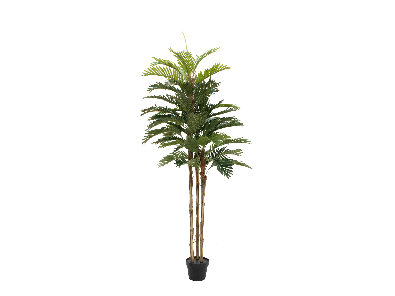 EUROPALMS Kentia Palme, Kunstpflanze, 150cm