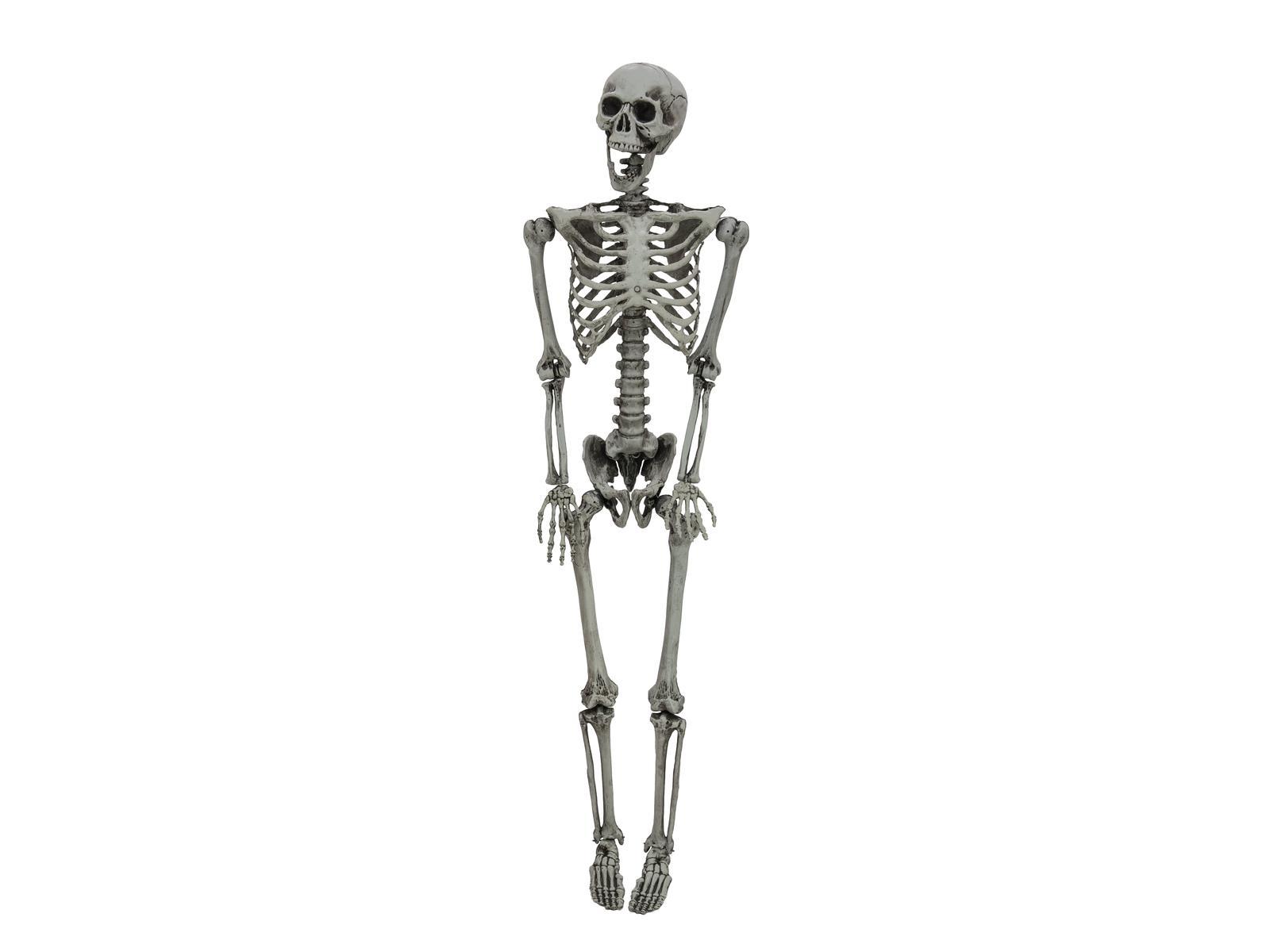 EUROPALMS Halloween Scheletro, sbiancato, 160cm