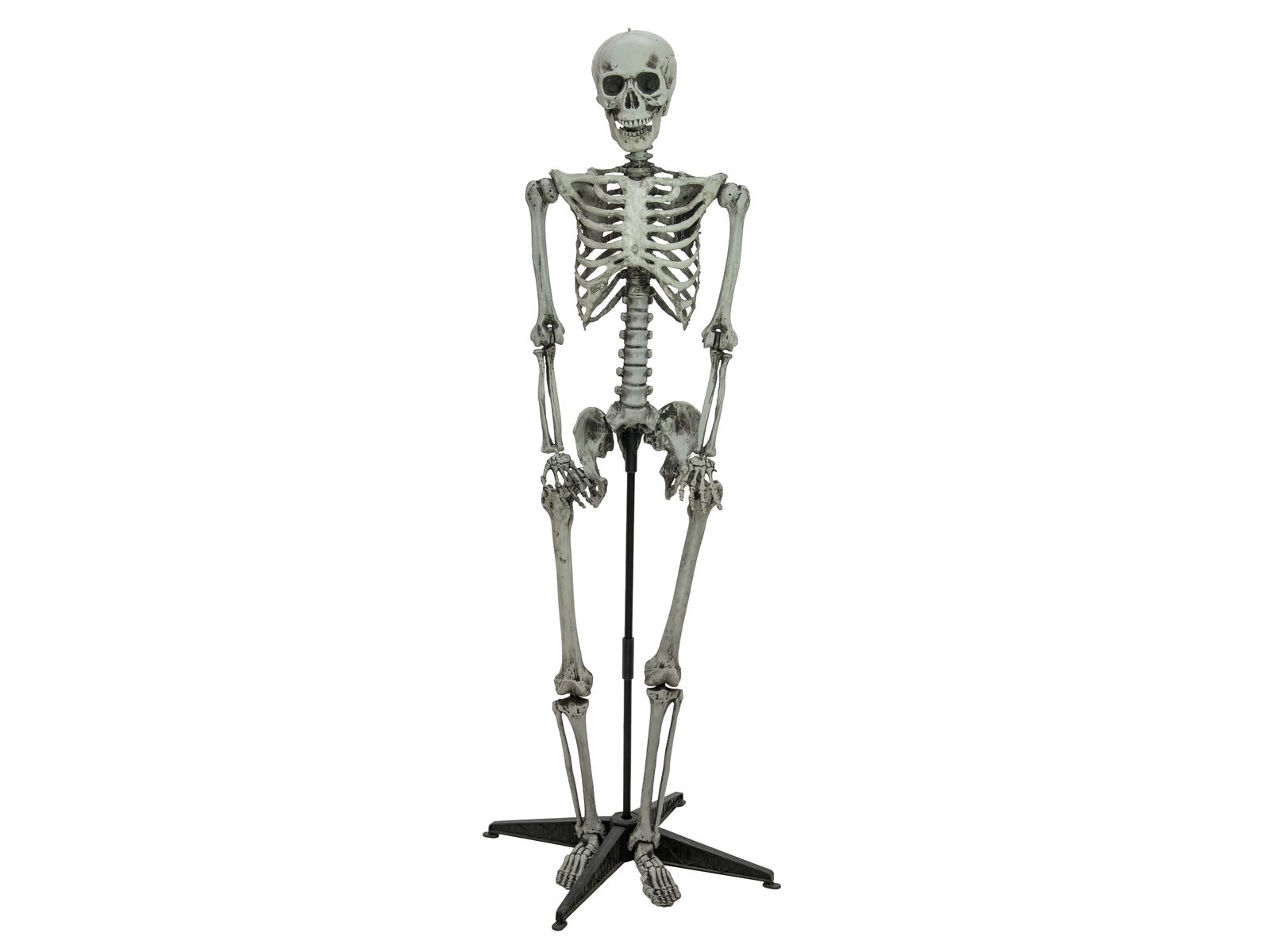 EUROPALMS Halloween scheletro in piedi, 160cm