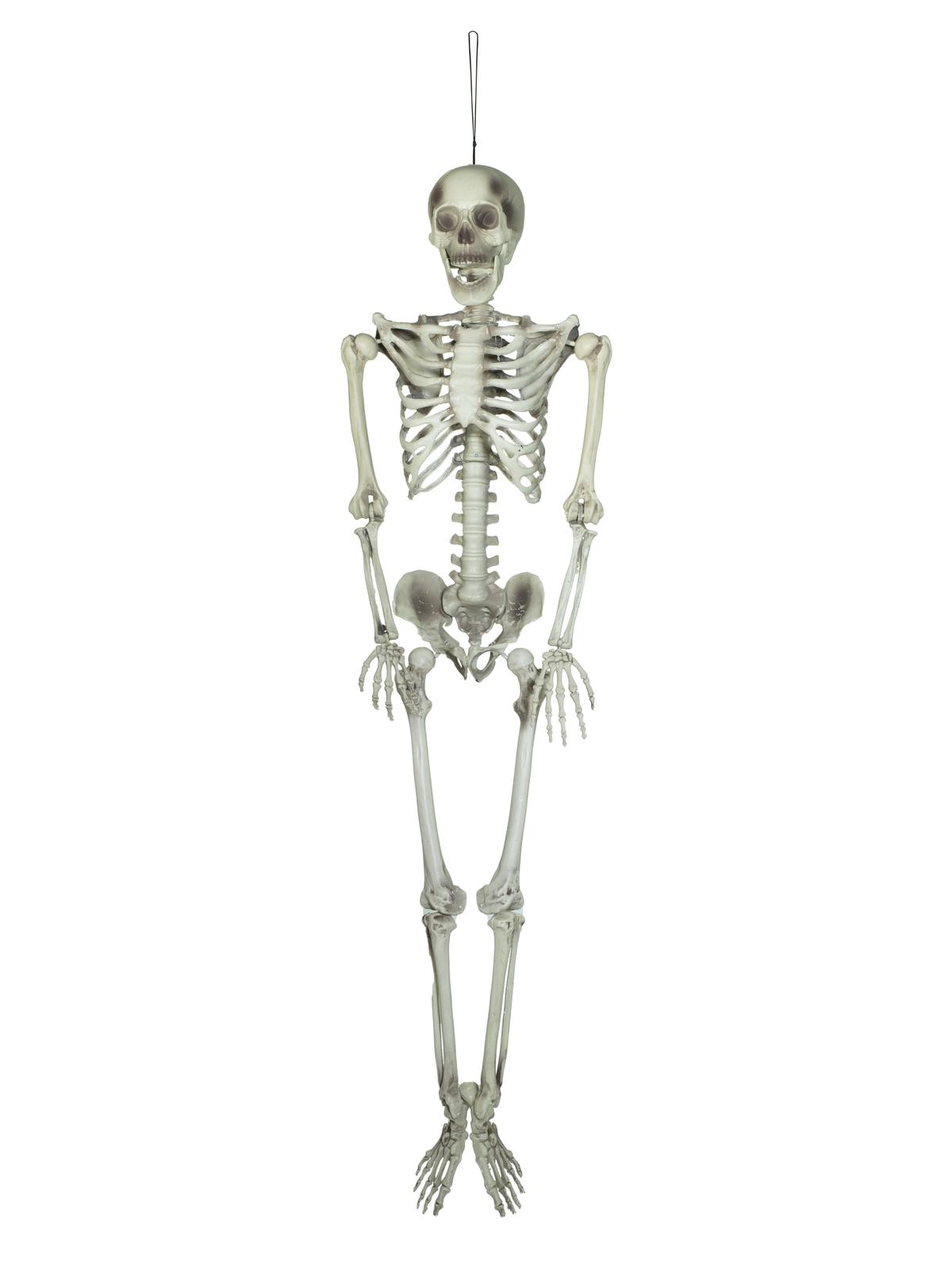 EUROPALMS Halloween Skelett, 150 cm