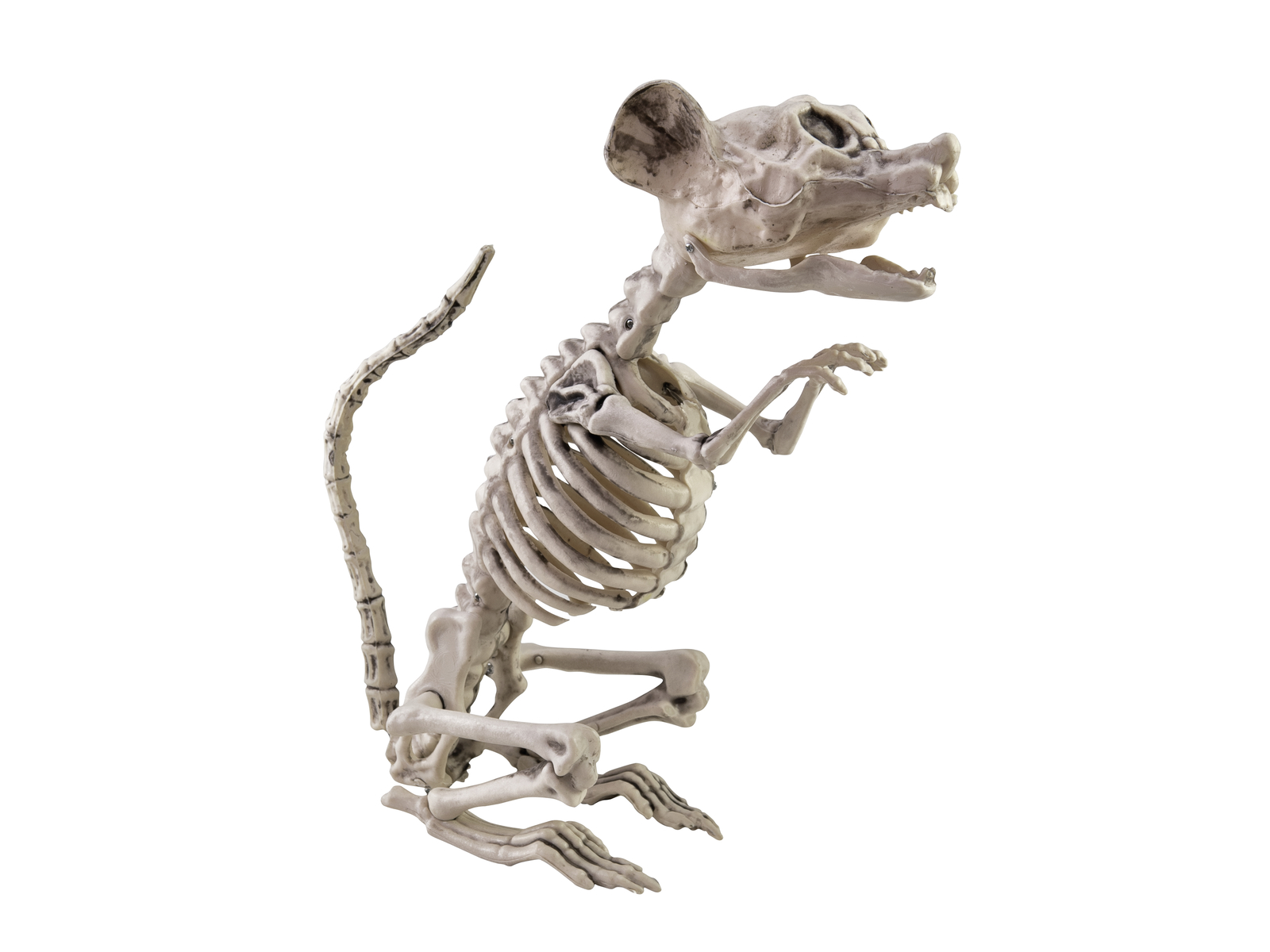 EUROPALMS Halloween Scheletro di Ratto, 32x10x16cm