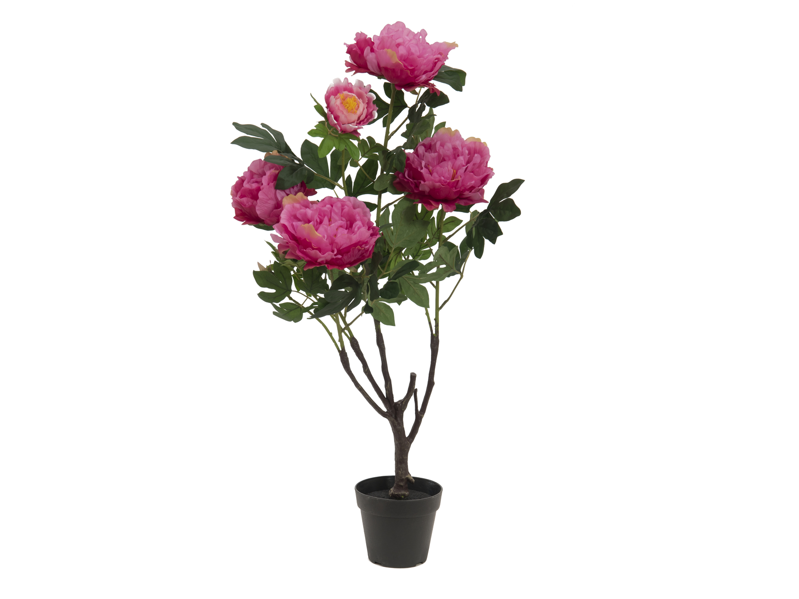 EUROPALMS Peonie, rose, 90cm