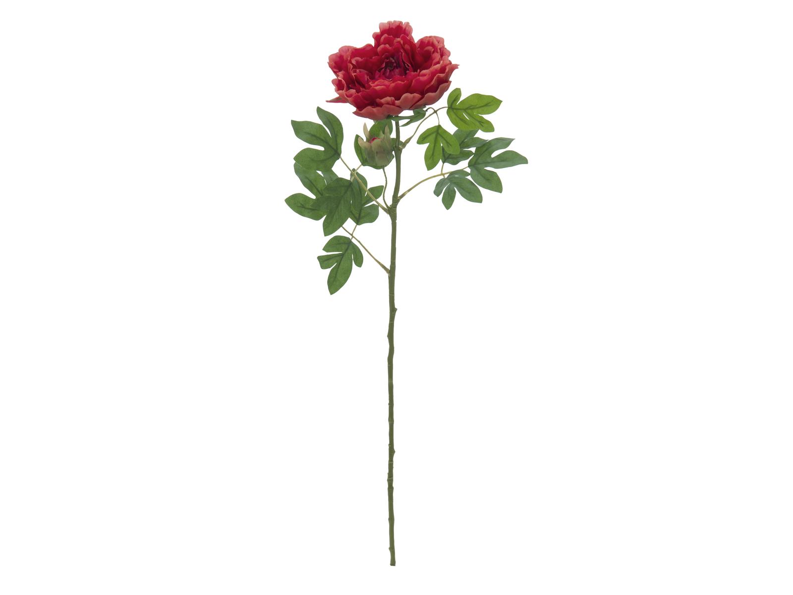 EUROPALMS Peonia Ramo Classico, magenta, 80 cm