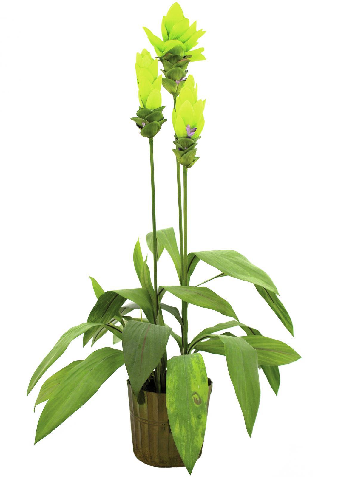 EUROPALMS Ingwerlilie, Kunstpflanze, 95cm