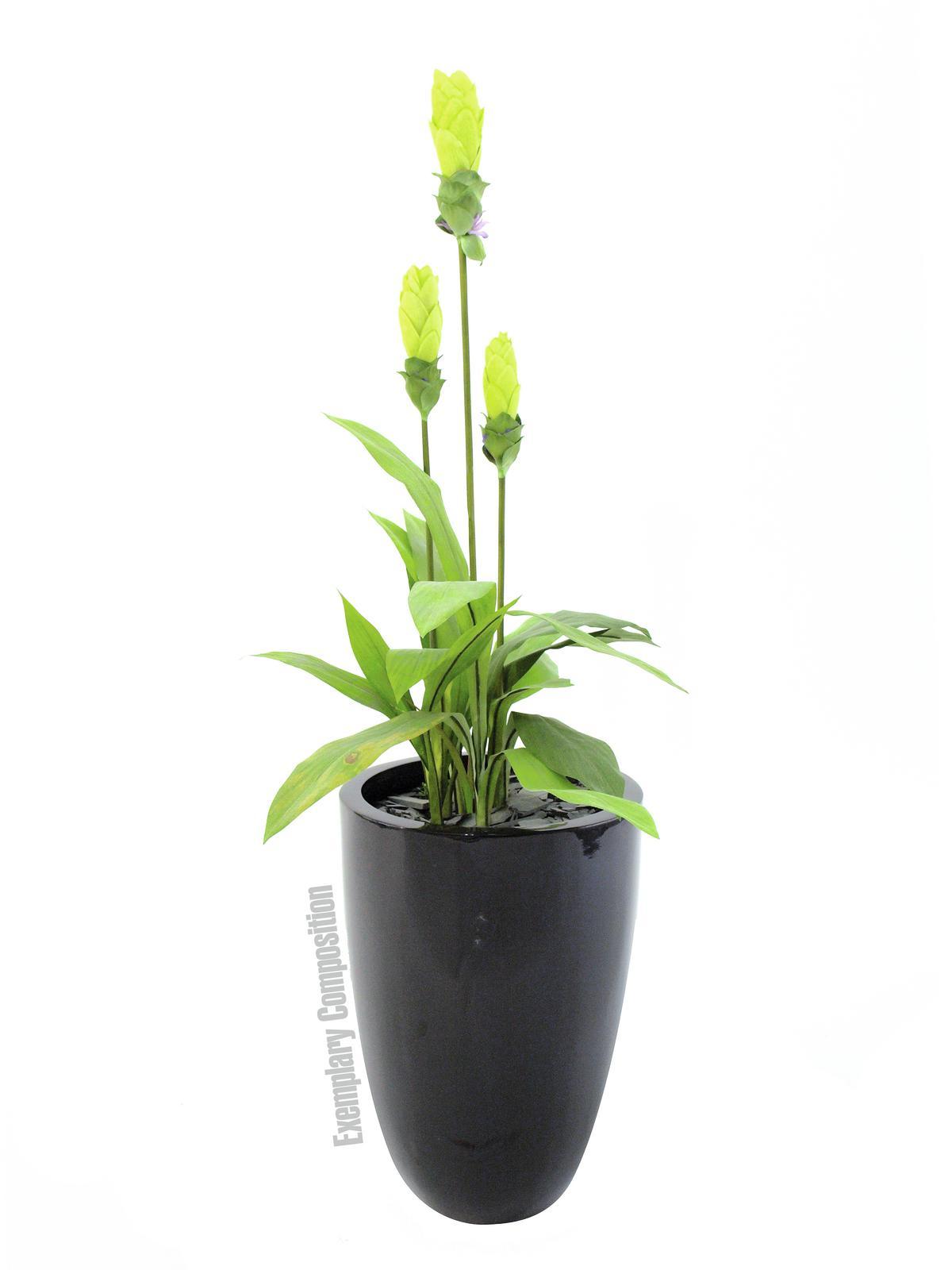 EUROPALMS pianta artificiale zenzero , 95cm