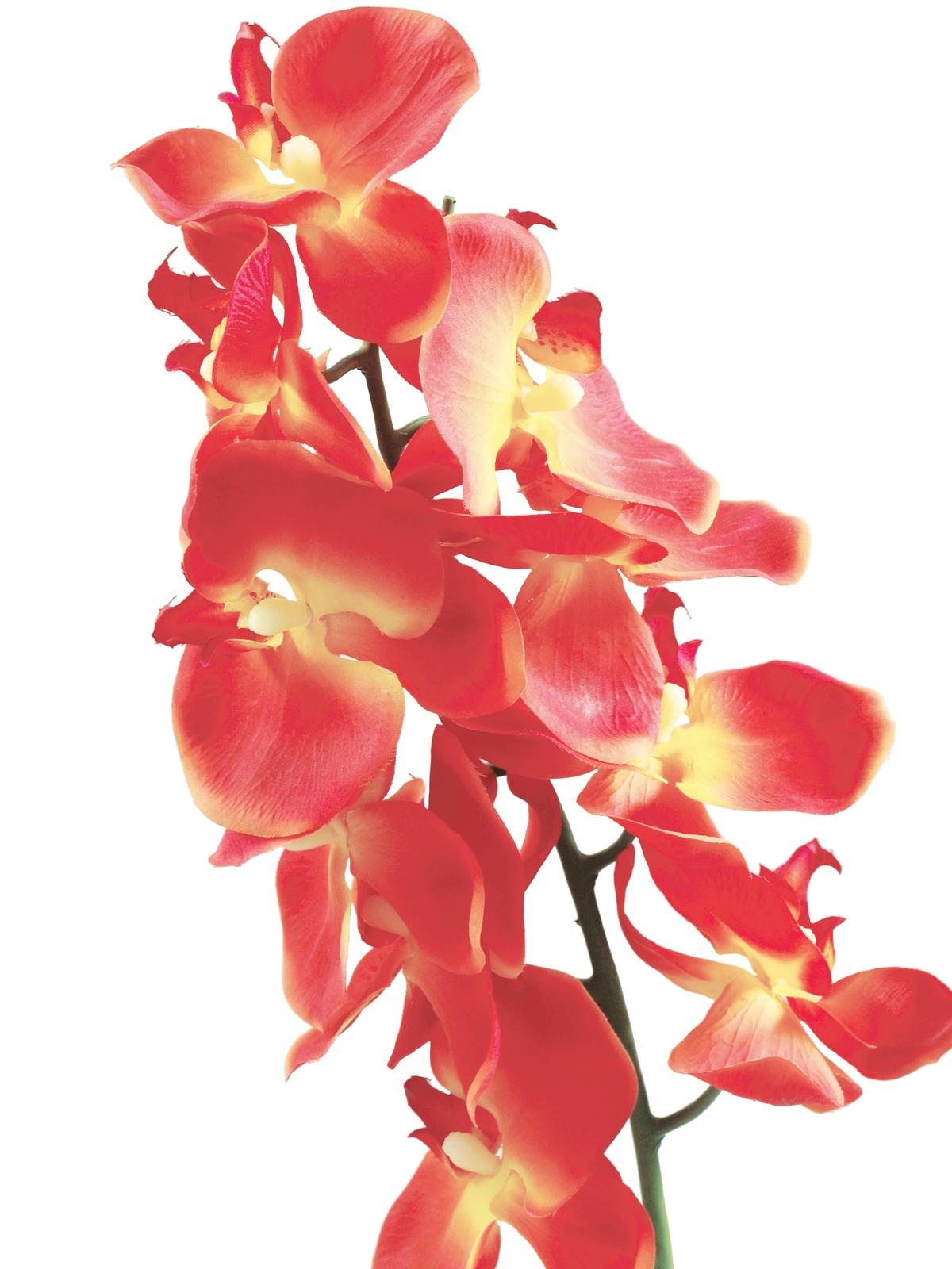 EUROPALMS Orchidea spray, arancione, 70cm