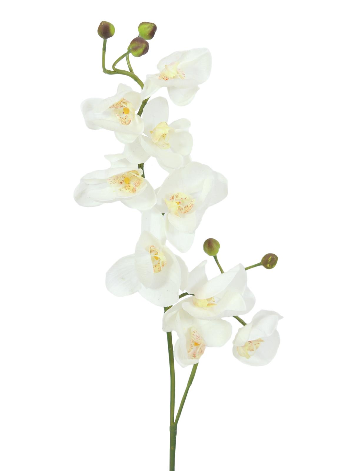 EUROPALMS Orchidea spruzzo, bianco-crema, 100cm