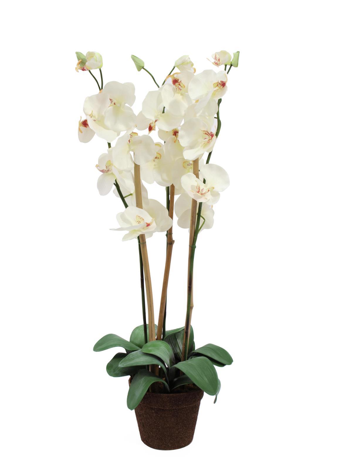 EUROPALMS Orchidea, bianco, 80 cm