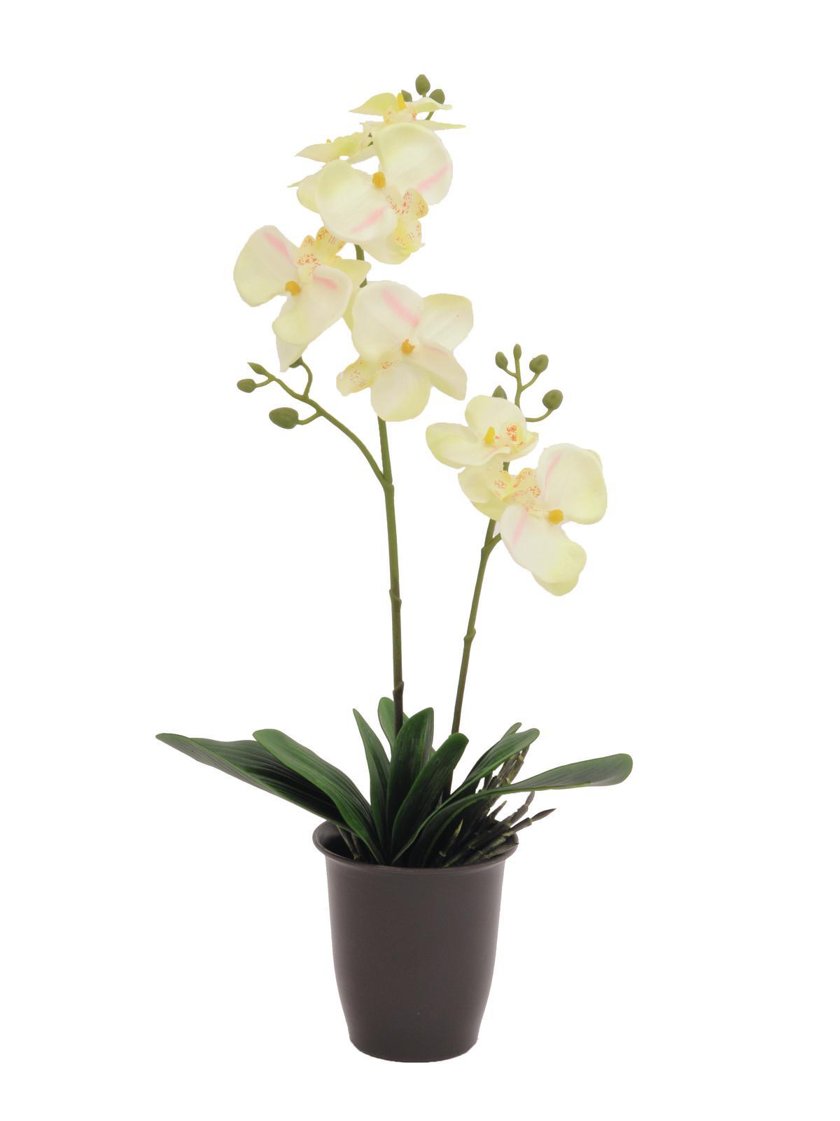 EUROPALMS Orchidea, crema, 57cm