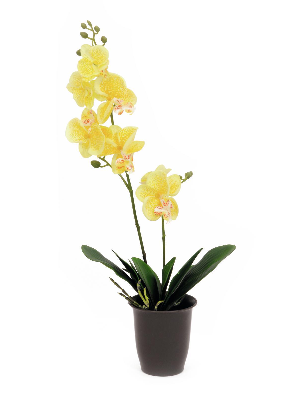 EUROPALMS Pianta Artificiale Orchidea gialla 57cm