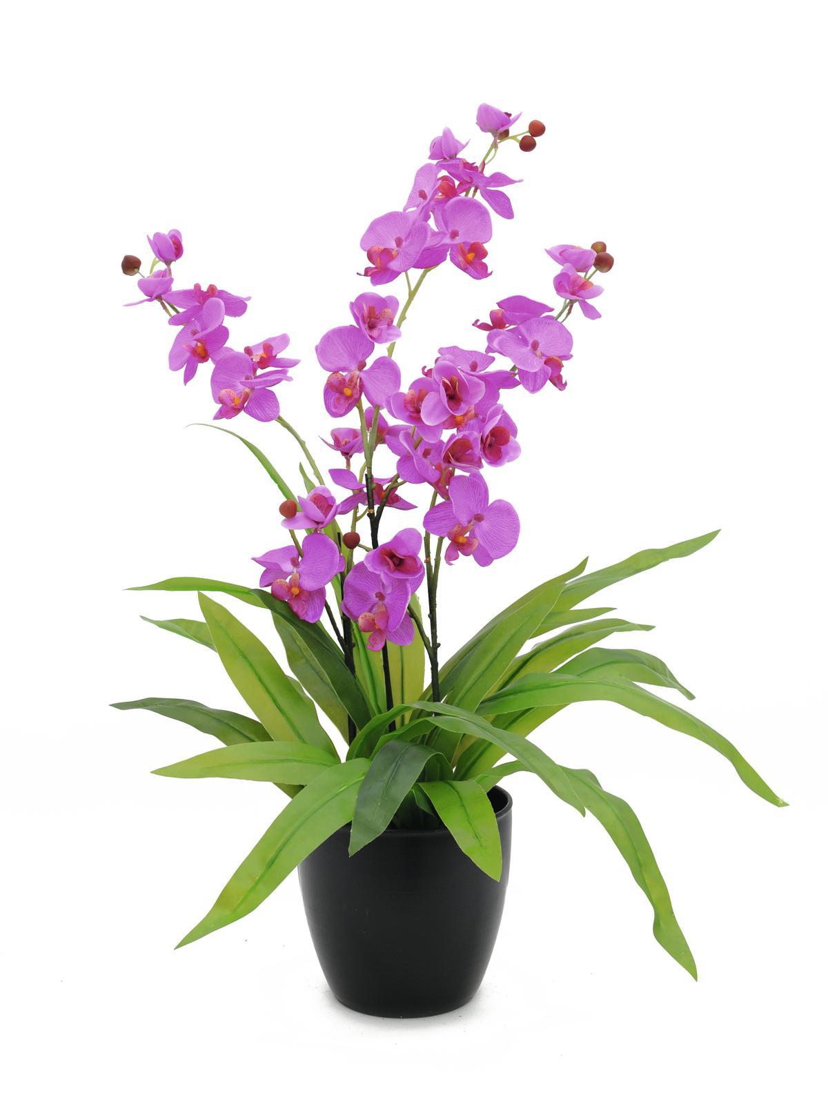 EUROPALMS Orchidea, viola, 80cm