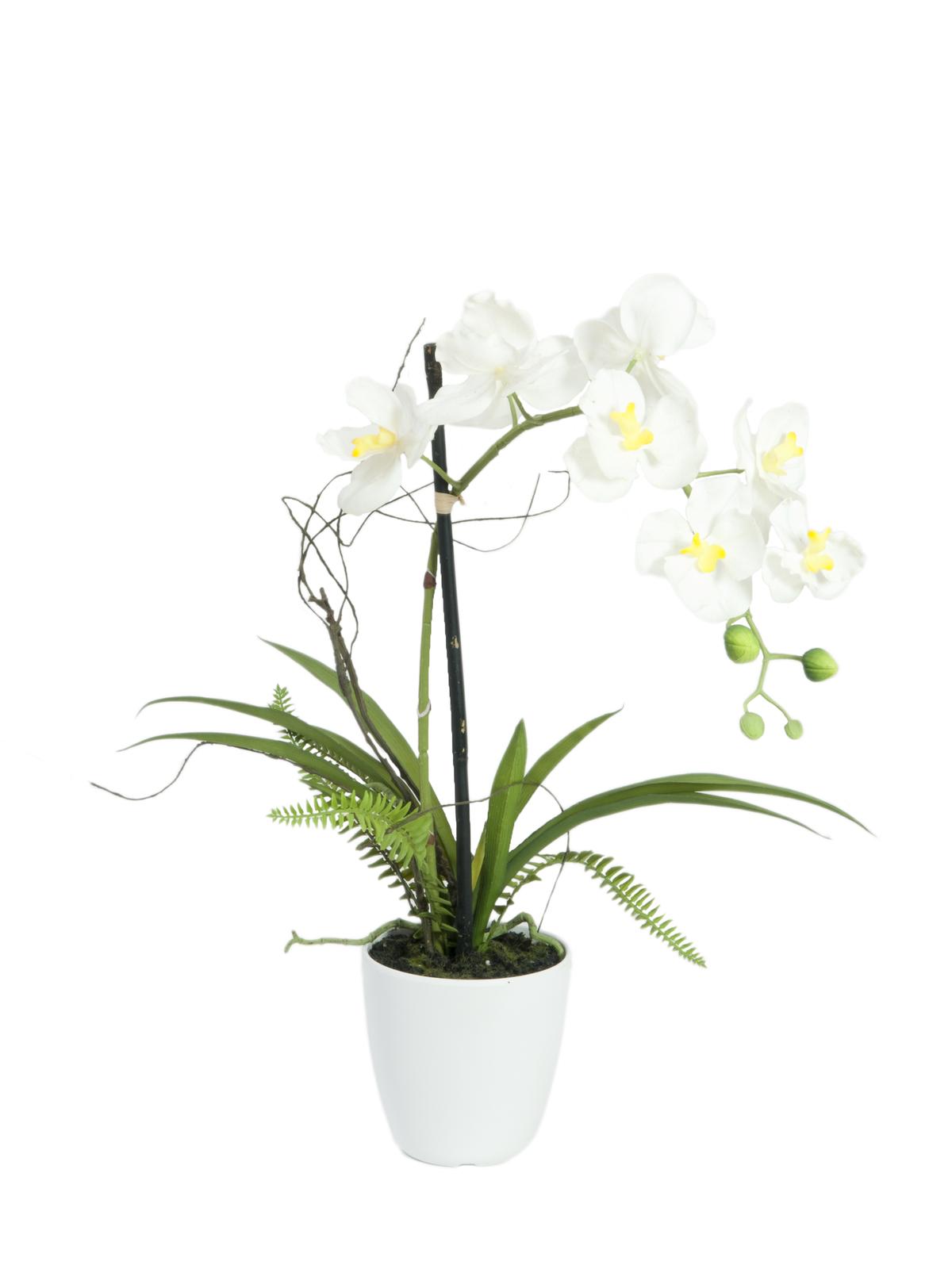 EUROPALMS Orchidea disposizione 1