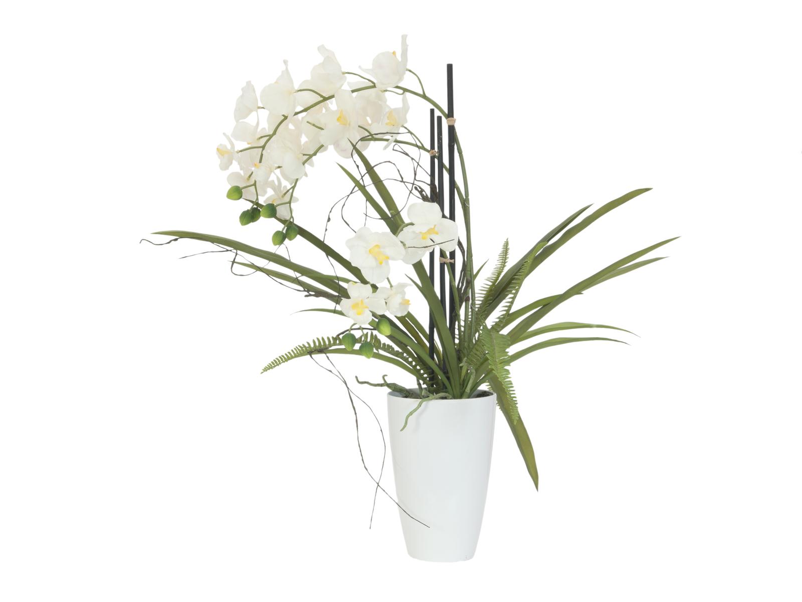 EUROPALMS Orchidea disposizione 2