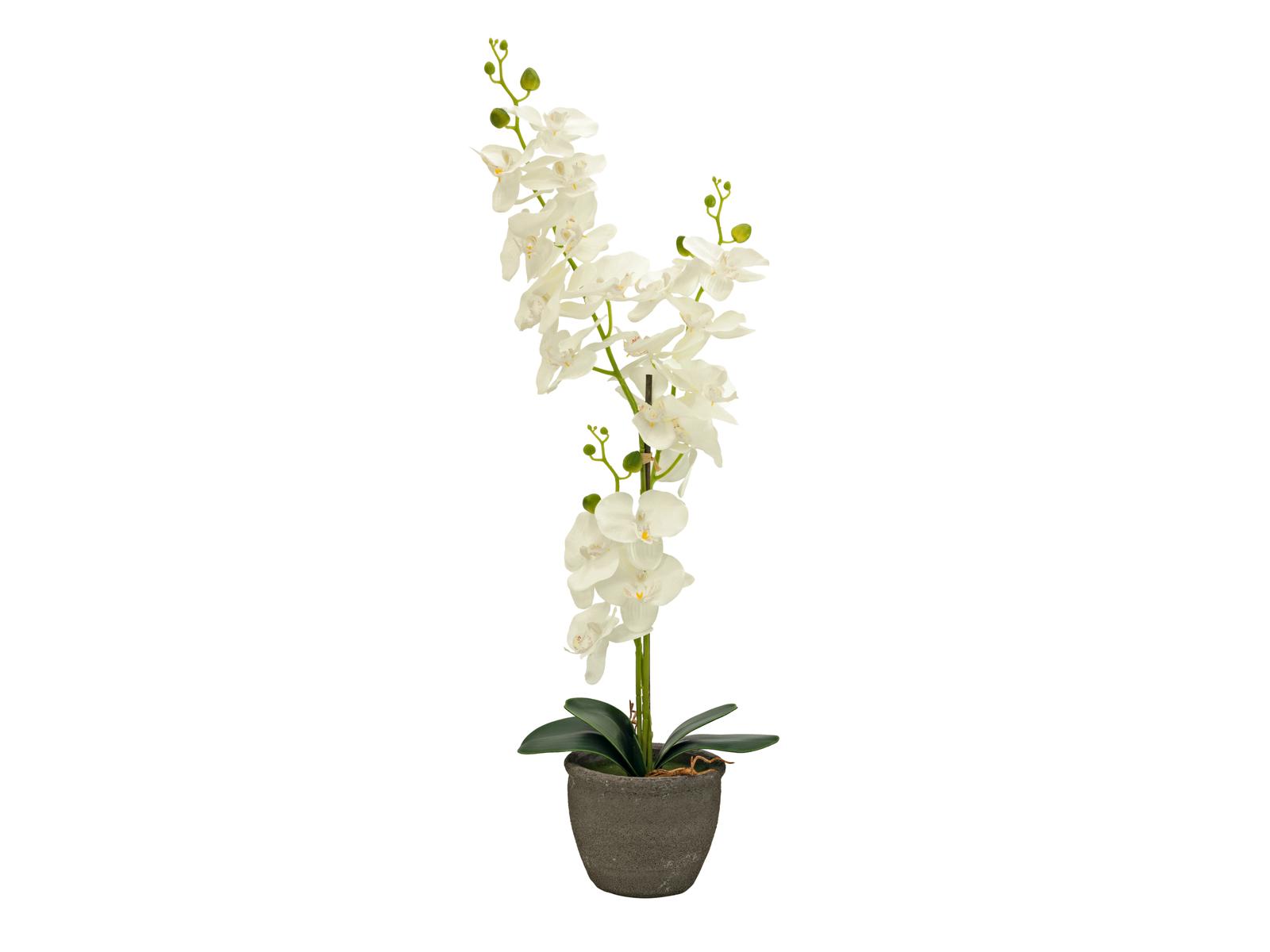 EUROPALMS di Orchidee, piante artificiali, panna, 80 cm