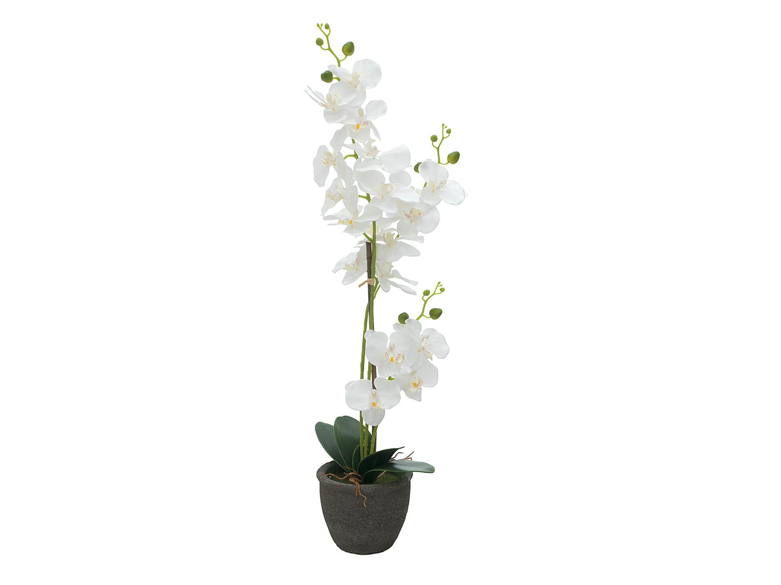 EUROPALMS di Orchidee, piante artificiali, bianco, 80 cm