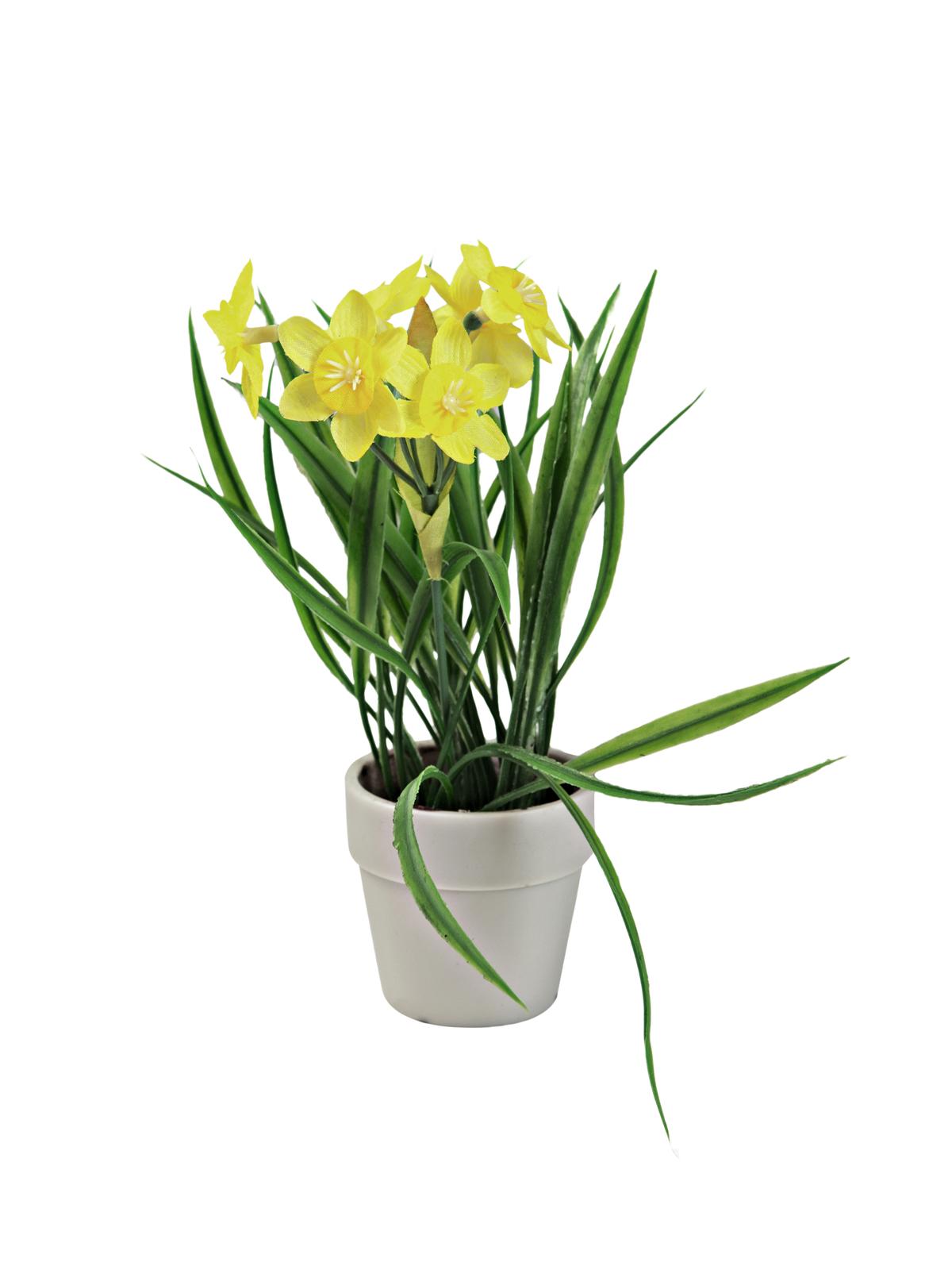 EUROPALMS Narciso, 22cm