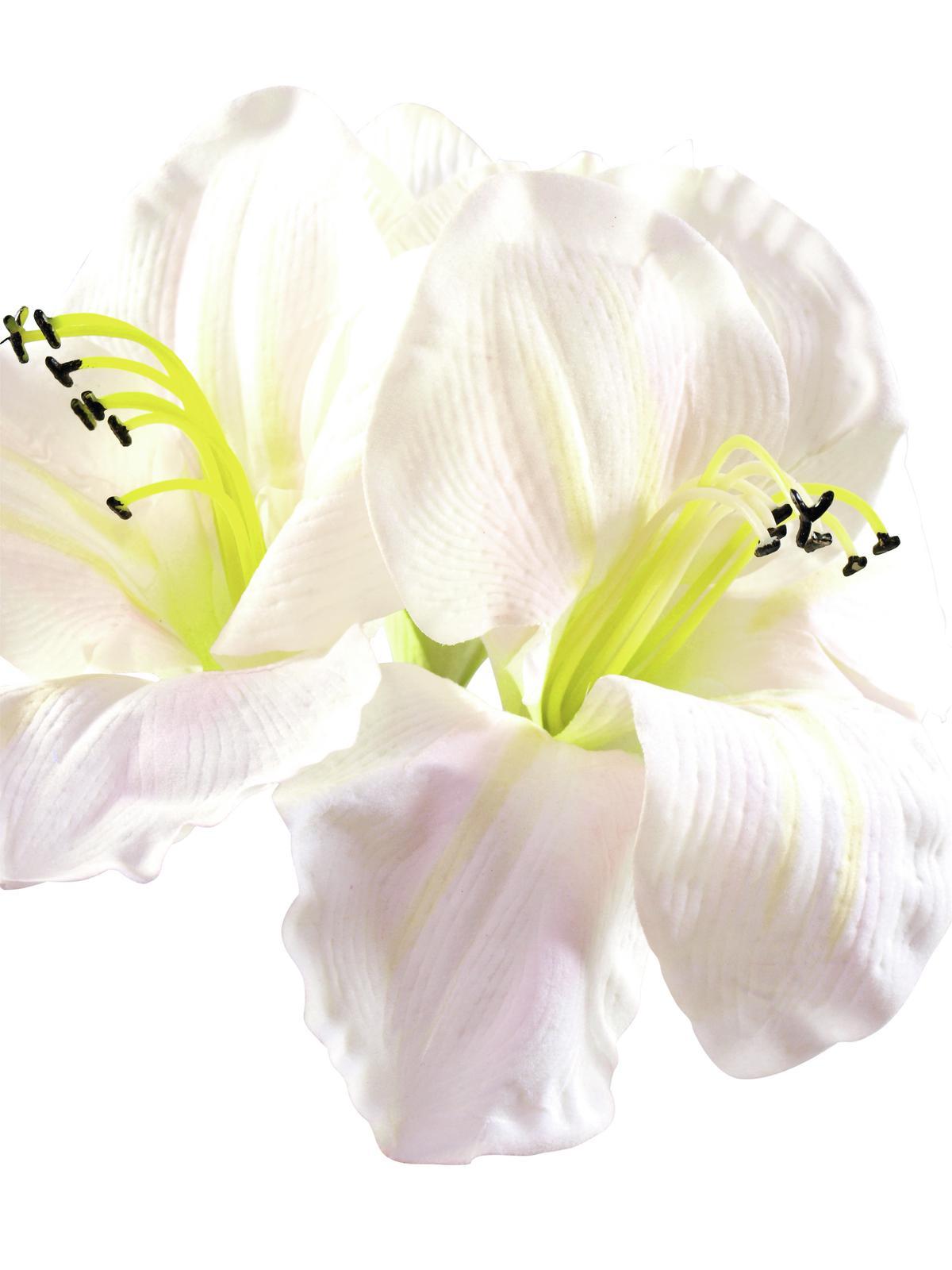EUROPALMS Amarylliszweig, künstlich, weiß, 72cm