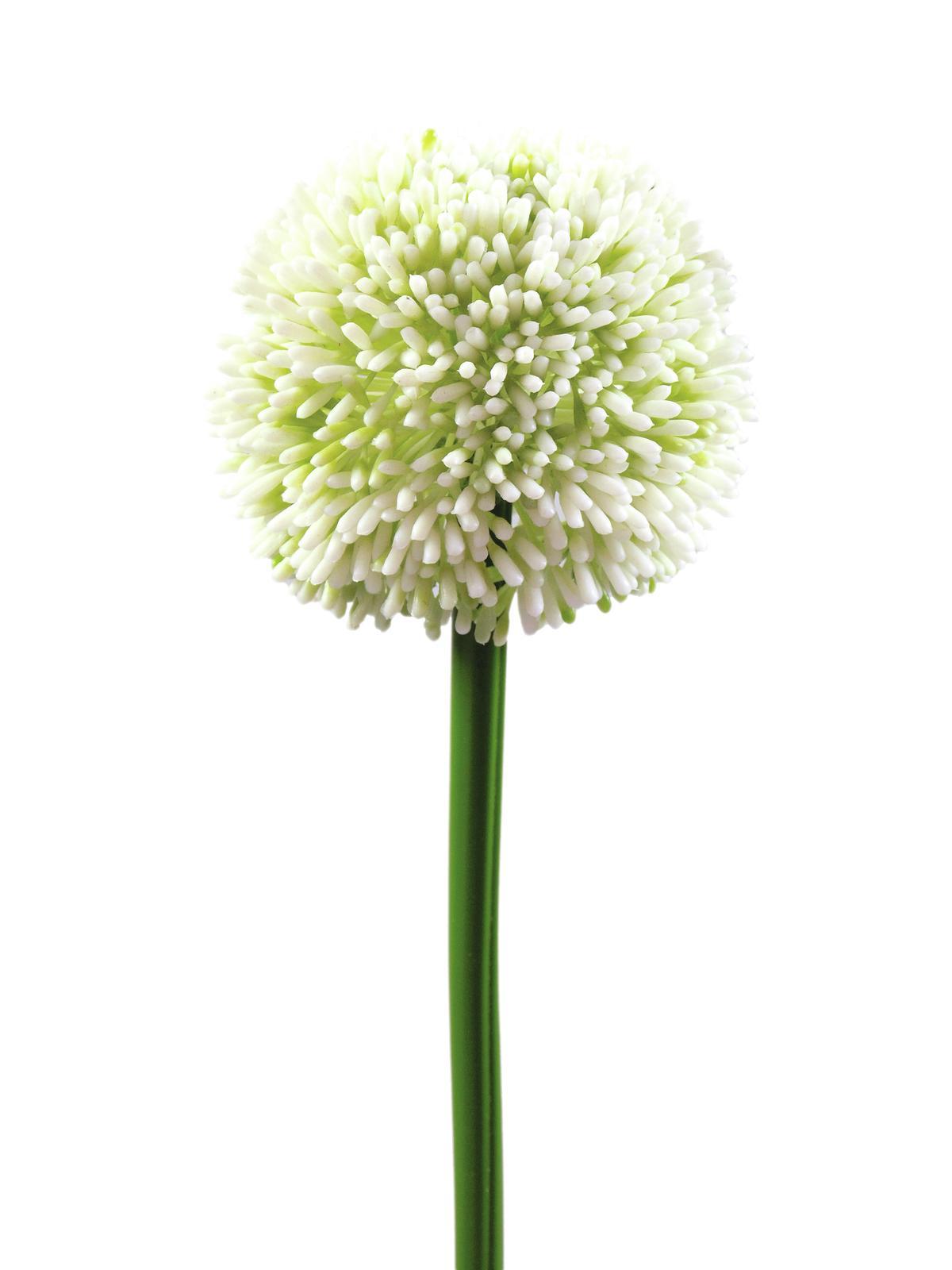 EUROPALMS Alliumzweig, künstlich, cremefarben, 55cm