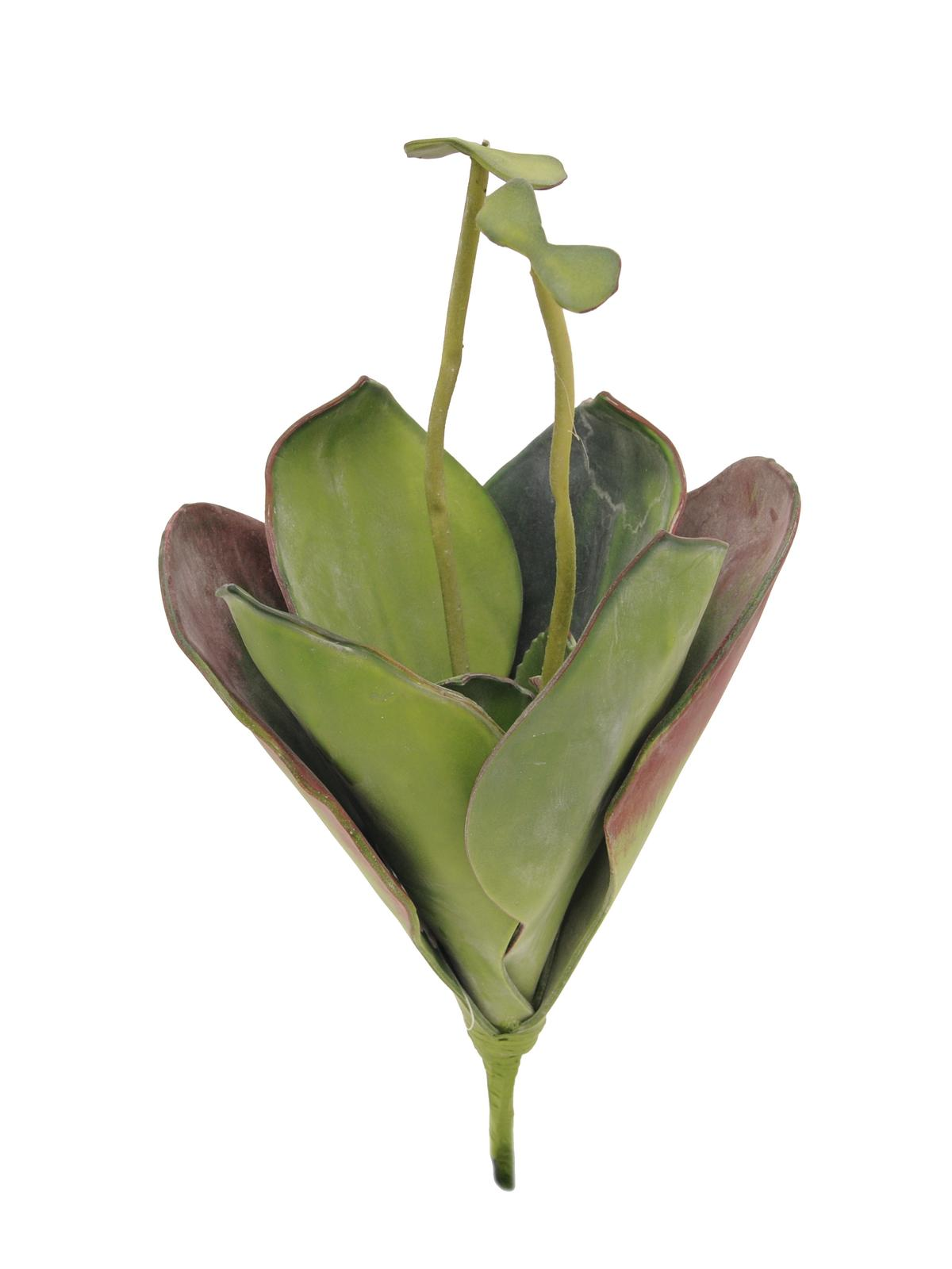 EUROPALMS Seerose (EVA), Kunstpflanze,geschlossen, grün, 45cm