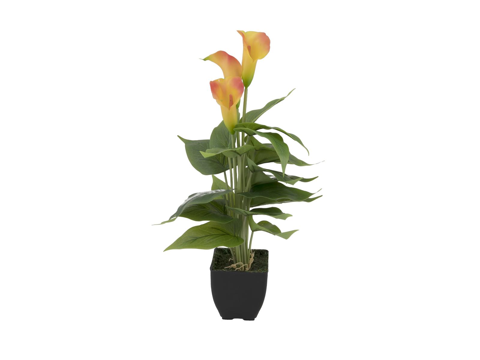 EUROPALMS Calla mini, Kunstpflanze, gelb orange, 43cm