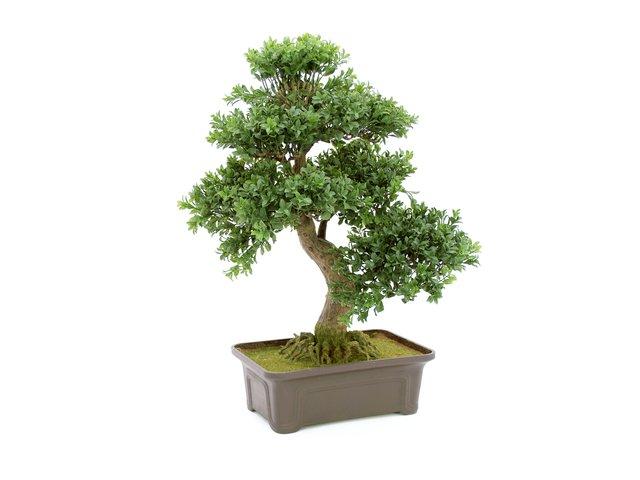 mpn82600004-europalms-buchsbonsai-kunstpflanze-61-cm-MainBild