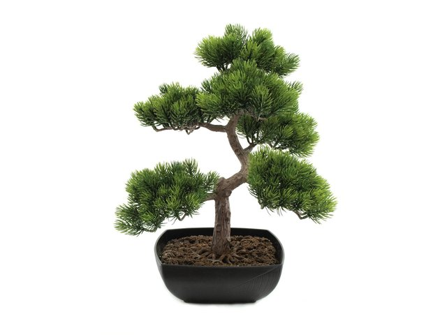 mpn82600110-europalms-pine-bonsai-artificial-plant-50cm-MainBild