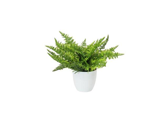 mpn82600216-europalms-farnbusch-im-dekotopf-kunstpflanze-22-blaetter-33cm-MainBild