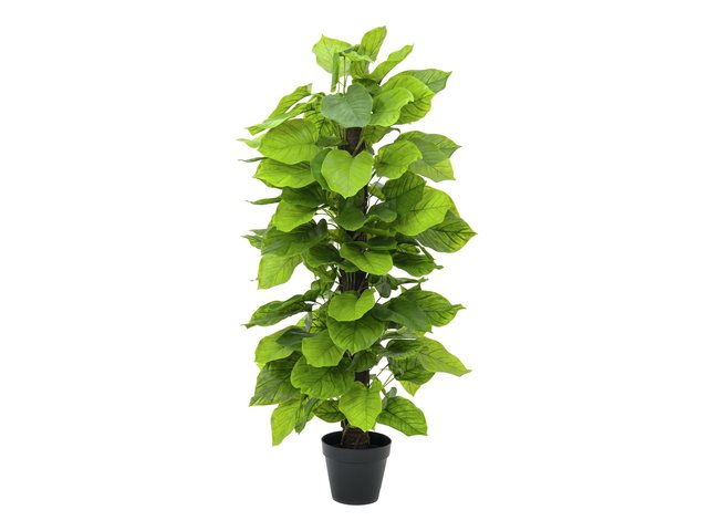 mpn82600228-europalms-pothos-kunstpflanze-125cm-MainBild