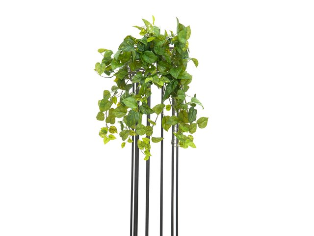 mpn82502501-europalms-pothos-bush-tendril-premium-artificial-50cm-MainBild