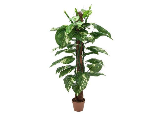 mpn82505320-europalms-pothos-am-stamm-kunstpflanze-150cm-MainBild