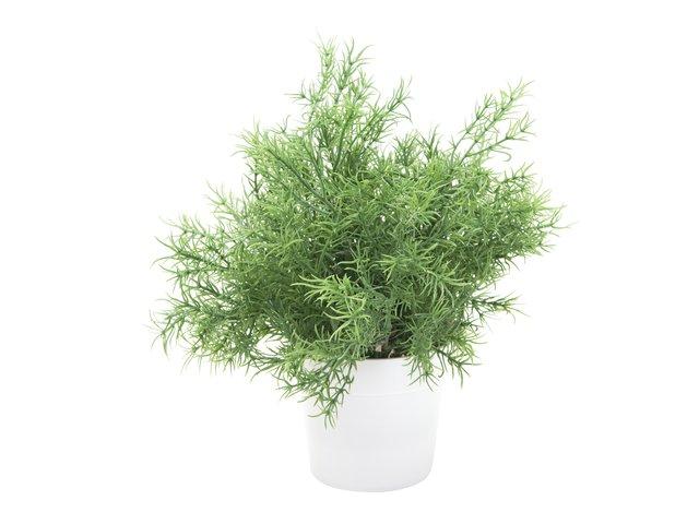 mpn82505626-europalms-asparagus-kunstpflanze-24cm-MainBild
