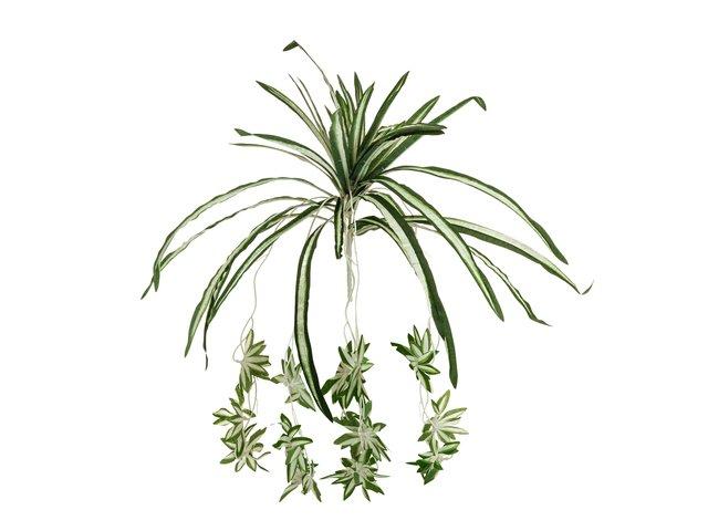mpn82505721-europalms-gruenlilie-kuenstlich-60cm-MainBild