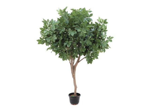 mpn82507390-europalms-giant-chestnut-tree-280cm-MainBild