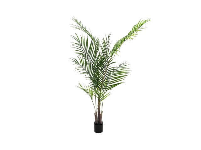 mpn82509441-europalms-areca-palm-with-big-leaves-artificial-plant-165cm-MainBild