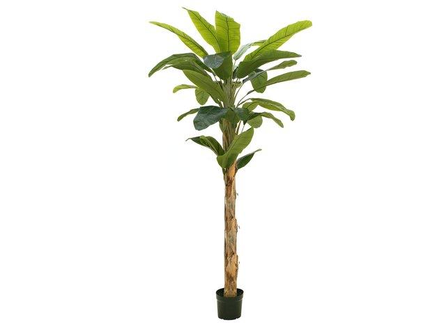 mpn82509507-europalms-banana-tree-artificial-plant-210cm-MainBild