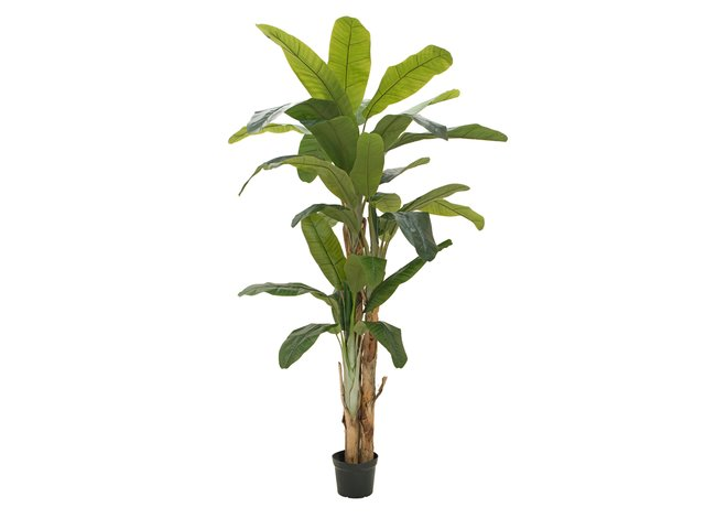 mpn82509541-europalms-banana-tree-artificial-plant-240cm-MainBild