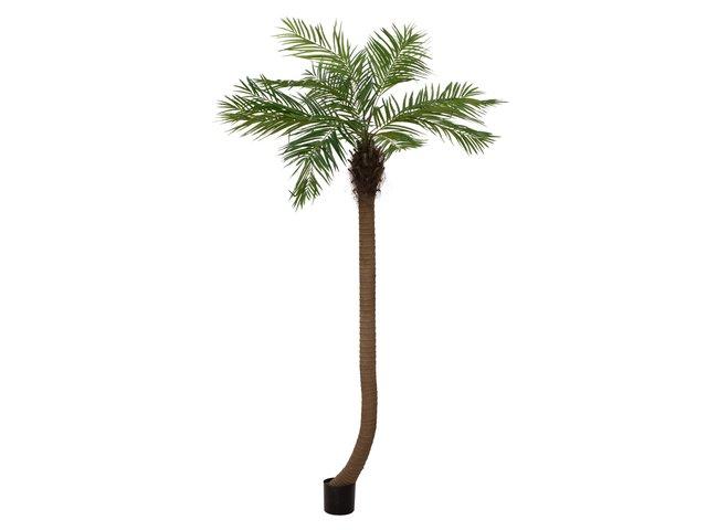 mpn82510726-europalms-phoenixpalme-luxor-gebogen-kunstpflanze-240cm-MainBild